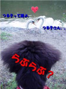 大きな鳥はちょっと怖いわ。