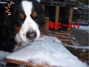 少しでも、やっぱり雪は冷たーい!