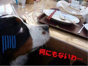 チョットしか食べてないのにぃ~!