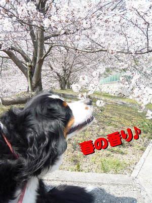 春の匂い♪