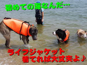 超~、超~、超~大型犬!