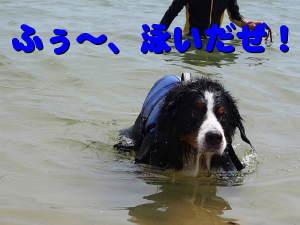 今年はよく泳いだぜ・・・