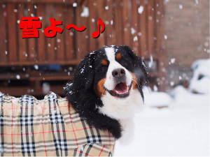 雪が降ってる~♪